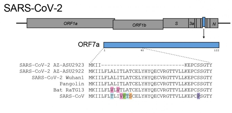 Scientific team finds new, unique mutation in coronavirus study