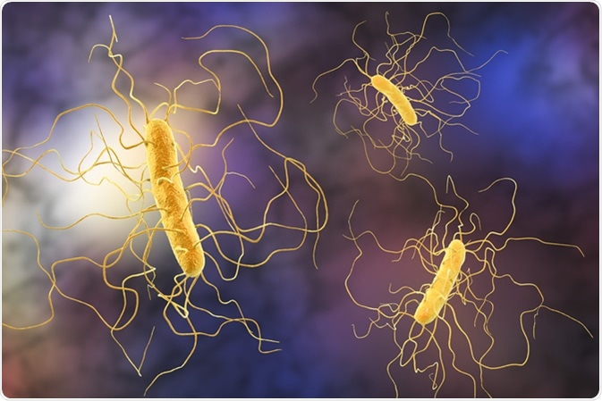 How to Recover Gut Health After Clostridium difficile Infection